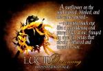 Lucid Dreaming sunflowerteaser